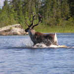 Top 6 Reasons to Visit Wabakimi Provincial Park